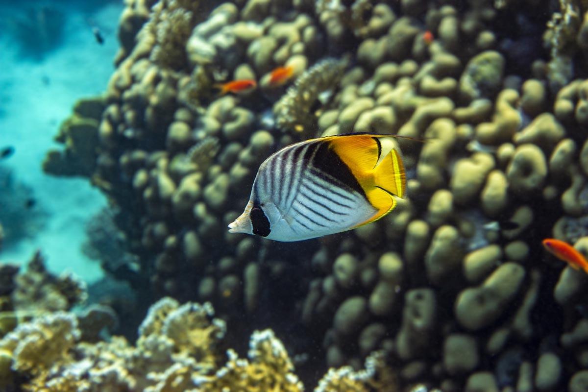 Podvodní fotky - Rudé moře - klipka