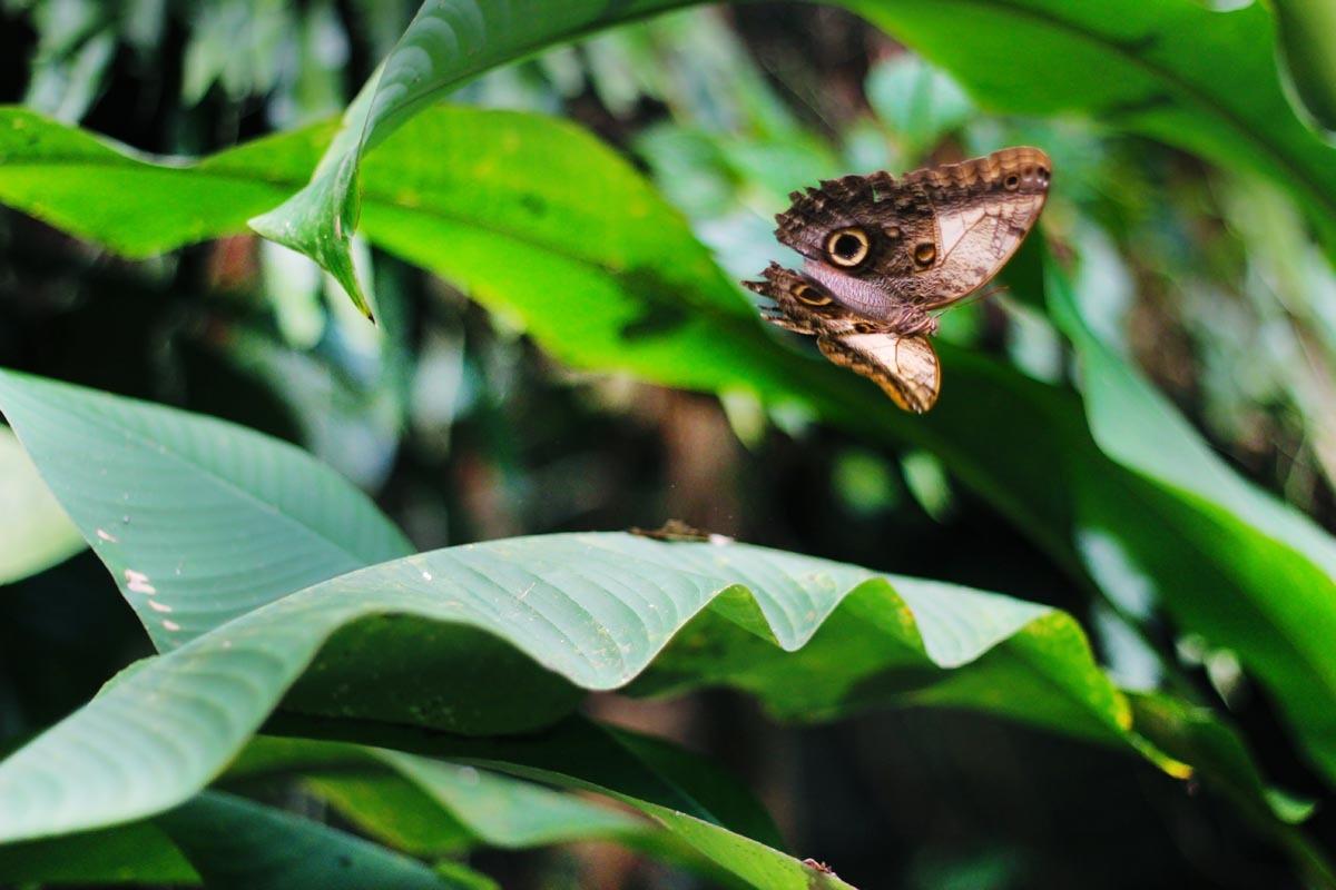 Fotografování přírody - makro, motýl, výstava motýlů