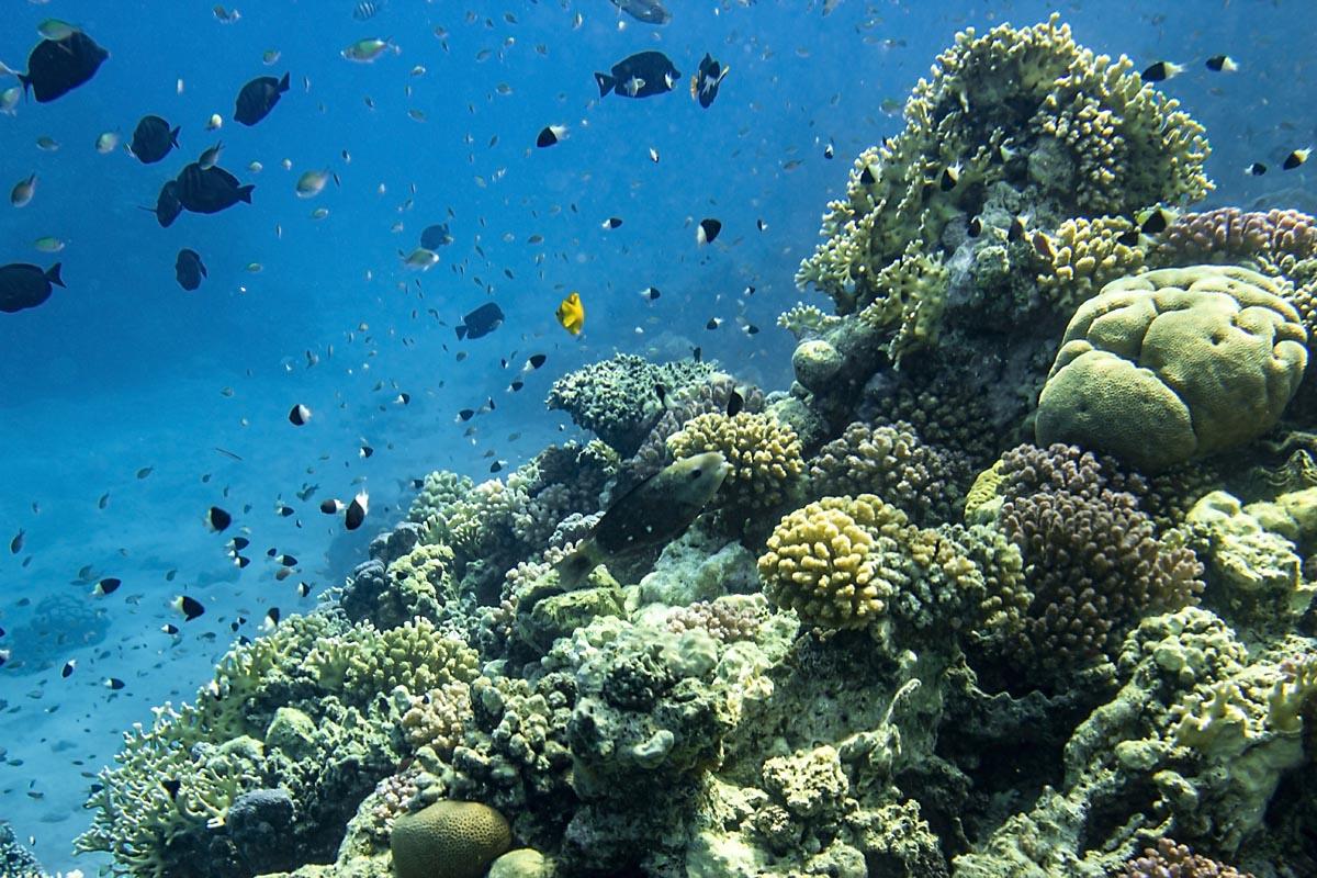 Podvodní fotky - Rudé moře - korálový útes