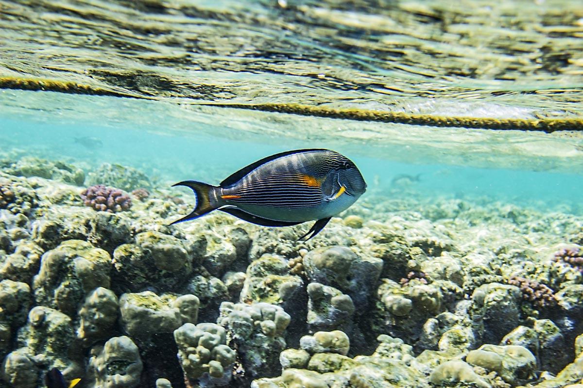 Podvodní fotky - Rudé moře - bodlok