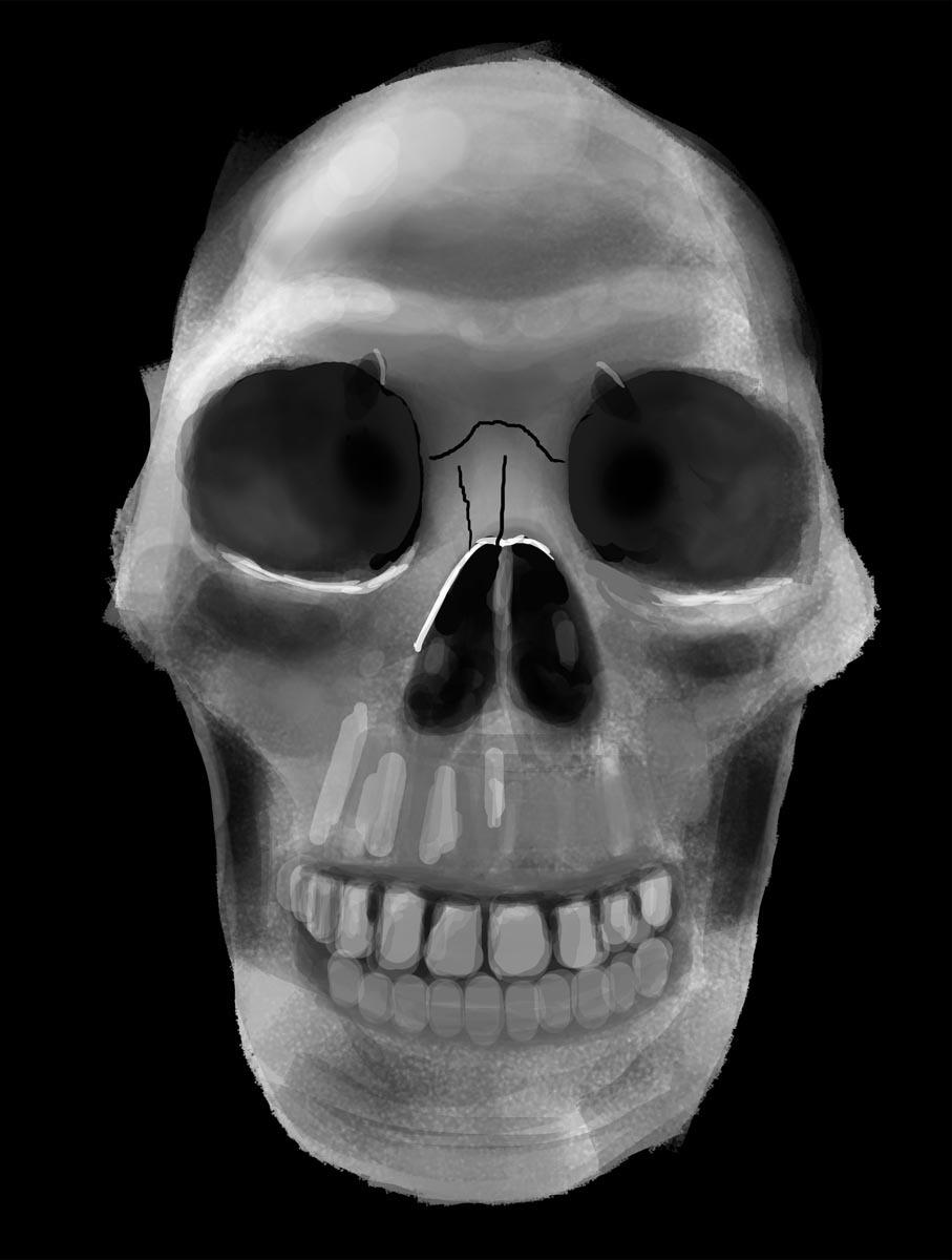 Lebka speedpaint - Digitální ilustrace