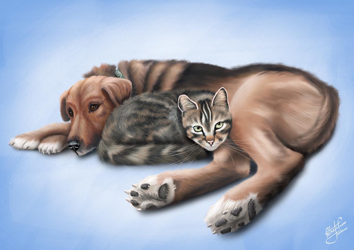 Digitální ilustrace na zakázku - Pes a kočka